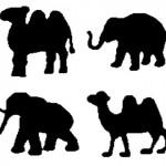 camels_elephants